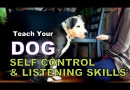 5 Game Exercises for Self-Control with Kristin Crestejo