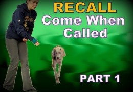 Starting Your Dog on a Solid Recall with Kristin Crestejo
