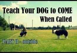 Advancing Your Dogs Recall with Kristin Crestejo