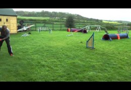 Dog Agility Pull Throughs Demonstrated