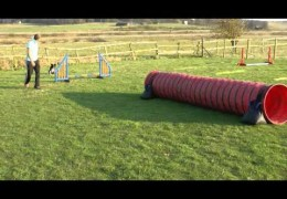 Puppy Agility That Leaves You Speechless