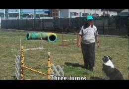 Another Way to Start the Dog Agility Serpentine