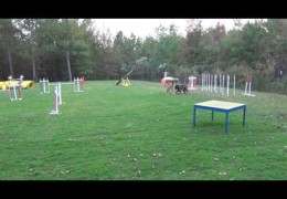 """Using the """"Zen Bowl"""" to Polish Dog Agility Teeter and Table"""
