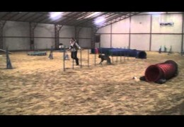 Daeron the Belgium Malinois Amazing in Dog Agility