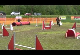 Jack Russell's and Dog Agility a Perfect Match