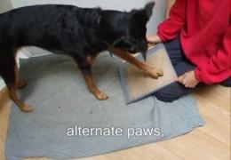 Three Methods to Teach Your Agility Dog to Nail Trim