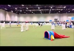 This Perfect run at the 2015 AKC Agility Invitational is Great Dog Agility