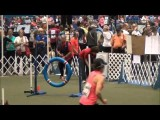 Petey the Pumi Crushing Dog Agility