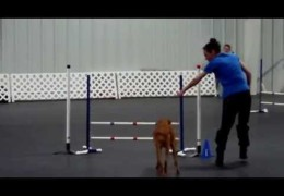 Another Great Pharaoh Hound Excelling in Dog Agility