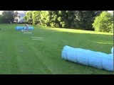 Teaching Dog Agility Serpentine Without Pressure