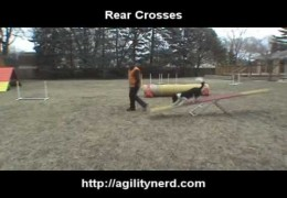 Steve Shows the Difference in Dog Agility Front, Rear and Push