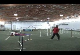 Leveraging a Dog Agility Fun Match is a Great Move
