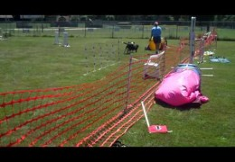 Running Dog Agility Brace Takes Finesse