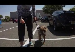 Counter Conditioning in Dog Training has Huge Payoffs