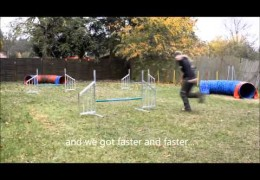Bearded Collie Gitdoon Slàinidh Rocks Dog Agility