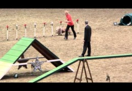 Bearded Collie Take the Win at 2013 Olympia