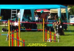 Another Bearded Collie Loving Dog Agility