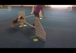 Try This Crazy Three Jump Dog Agility Drill