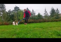 Urban Dog Agility Motivating a Slow Starter