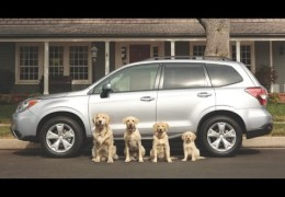 10 Great Commercials with Dogs