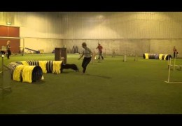Outstanding Dog Agility with Nap & Quazar
