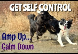 Helping Your Over Excited & Rambunctious Agility Dog