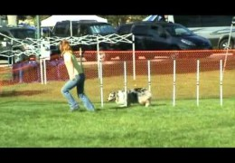 Wow this Aussie Knows Her Dog Agility
