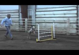 Porter Earns Her Dog Agility C-ATCH2