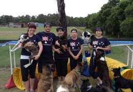 These Aussies are Having a Blast with Dog Agility