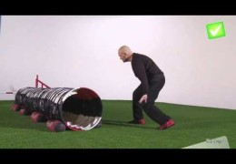 OMD Demonstrates Dog Agility Tunnel Brake