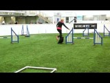 Valentine's Day Dog Agility Game