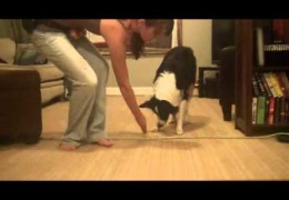 Teach Your Dog Boundaries With Positive Reinforcement