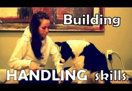 Helping Your Dog to Love Being Handled