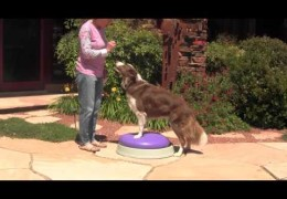 Building Core Strength in Your Agility Dog