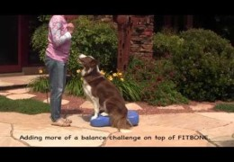 Building Core Strength in Your Agility Dog Pt 2