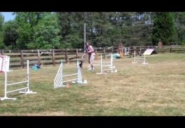 "The UKI Dog Agility ""Knockout"" Game"
