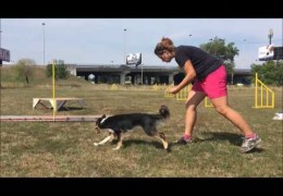 Tic Learning Dog Agility Running Contacts