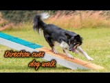 Amazing Directional Cues After Running Dogwalk