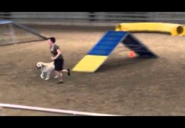 Guster Aces This UKC Dog Agility Course