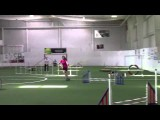Whoa, Crazy Fast Papillon in Dog Agility