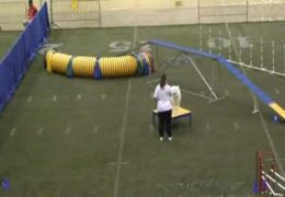 Venus Gets Crazy Zoomie in Dog Agility