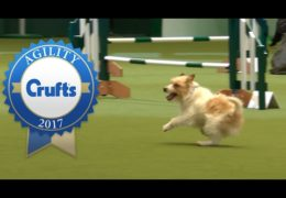 Dog Agility Bloopers from Crufts 2017