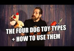 Help With Toys for Your Agility Dog