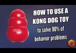 Easy Ways to Use Your Agility Dogs Kong Effectively