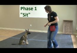 Starting Your Agility Dog on the Sit Command