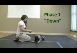 Starting Your Agility Dog on the Down Command