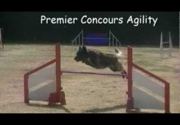 This Belgian Tervueren is On Fire in Dog Agility