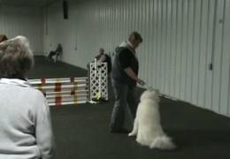 Sasha Sets the Dog Agility Bar High