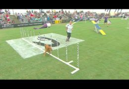 Amazing Large Dog Agility in Huntington Beach