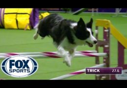 Winners of the 2017 Masters Agility Championship at Westminster